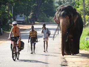 Die Eichmüllers (Fahrrad) hätten wahrscheinlich auch manchmal gerne den Elefanten als Reisemittel bevorzugt. Foto: privat